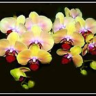 Beautiful Orchids by vette