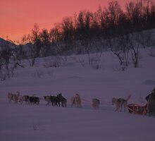 Dog sledding in Tromso, Norway by sarchuk63