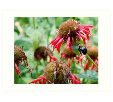 "Bumble Bee 3 ""slim pickings"" Art Print"