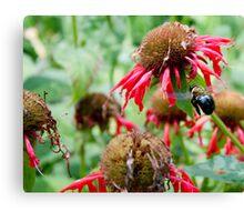 "Bumble Bee 3 ""slim pickings"" Canvas Print"