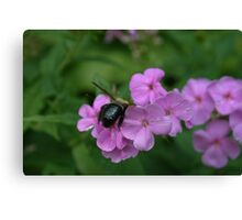 """Bumble Bee 4 """"I think I can"""" Canvas Print"""