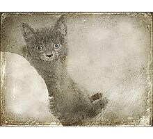 Kitty Art Photographic Print