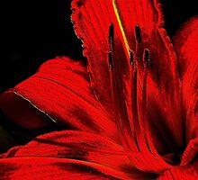 Red ! by Elfriede Fulda