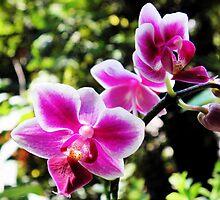 Phalaenopsis Orchid Spray by Linda Gleisser