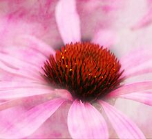 Echinacea by RosiLorz