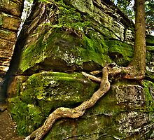 Persistence of a Tree Root by John Hartung
