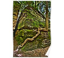Persistence of a Tree Root Poster