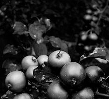 Crabapples Black and White by Conor Donaghy