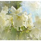 Soft Petals by Delights