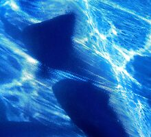 Sharks by Shulie1