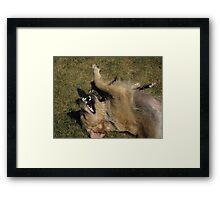 Ah!...This is truly a dog's life! Framed Print