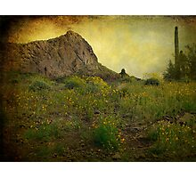 Desert in the Spring Photographic Print