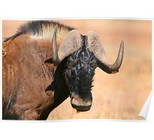 Black Wildebeest Poster
