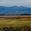 Sonoma Valley by RoySorenson