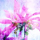 Beautiful Magnolia by Marcia Rubin