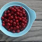 Cherries in a Blue Bowl by micala