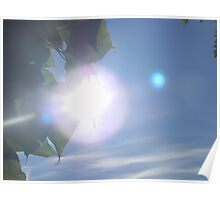 Sun Behind The Leaves Poster
