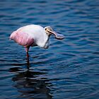Spoonbill With Writhing Shrimp by Joe Jennelle