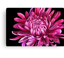 "Chrysanthemum ""the opening"" Canvas Print"