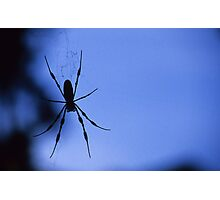 Spider in Shadow Photographic Print