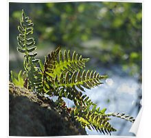 Lakeside Ferns Poster
