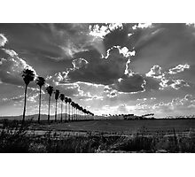 palms and cumulus clouds Photographic Print