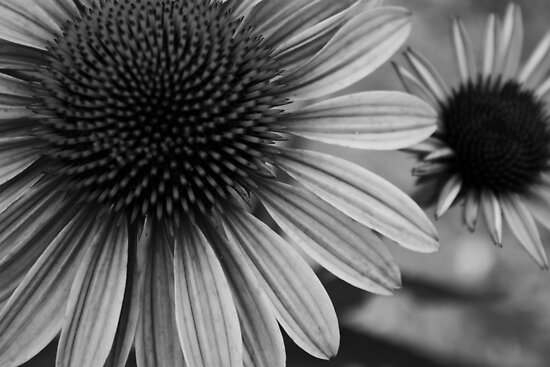 Black and White Summer Flowers by dgweathers