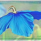 Out of a fairytale book, waiting for a blue fairy to land by IngeHG