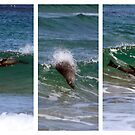 Surfin Seal by WendyJC