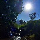 Hobsons Creek by Tanya Rossi