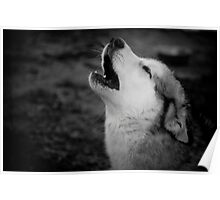 Howl from the heart  - Alaskan Malamute Poster