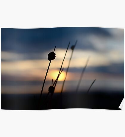 Silver Sands Sunset Poster