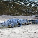 What a Croc :\ by Tanya Rossi