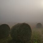 Wheat Field In The Mist by glynk