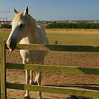 Horse Pokes His Tongue Out At Me. by glynk