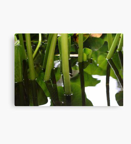 aquatic plants Canvas Print