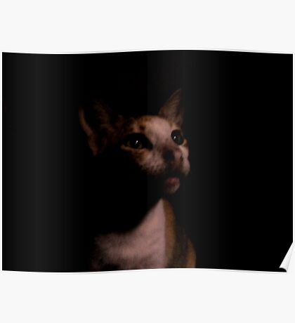 nocturnal cat Poster