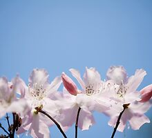 Bunch of pink Rhododendron by Arletta Cwalina
