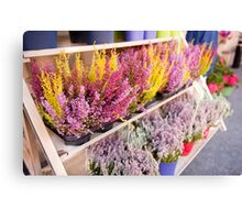 Shop shelves with blooming heather Canvas Print