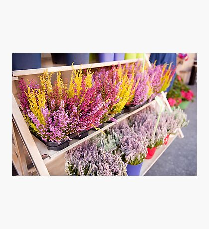 Shop shelves with blooming heather Photographic Print