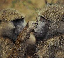 Checking For Fleas by Richard Shakenovsky