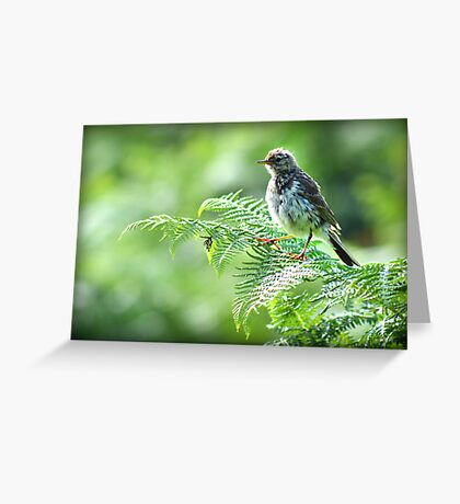 Fledgling Meadow Pipit. Greeting Card