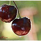 Cherry Ripe by chloemay