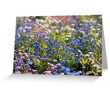 Myosotis flowering in spring Greeting Card