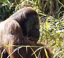 Orangutan in thought by Leoni South