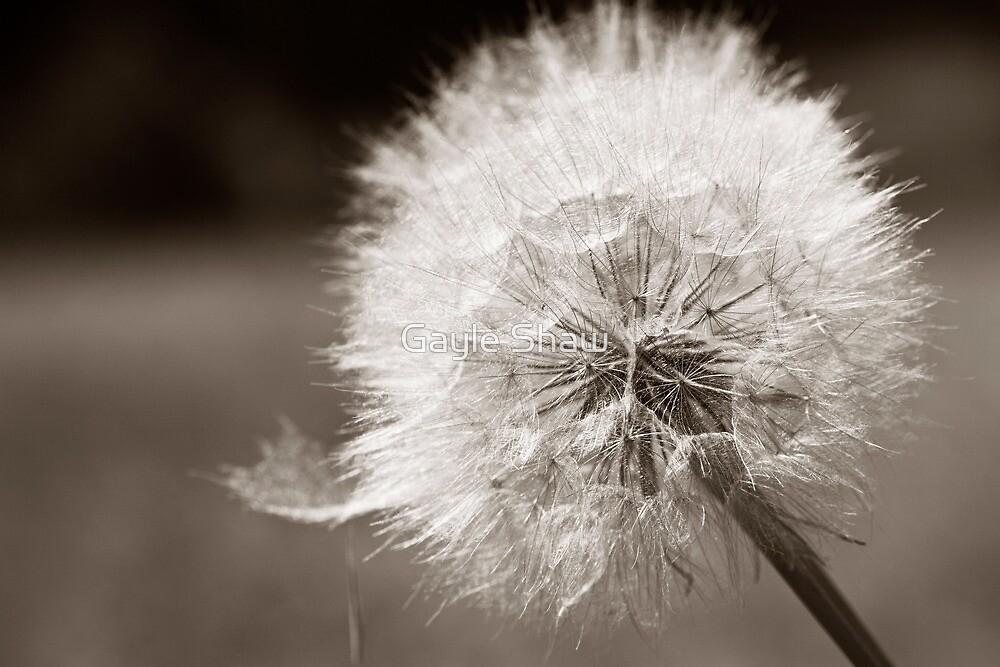 Dandelion Puff by Gayle Shaw