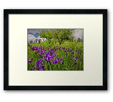 Wild Iris ~ Finley Refuge ~ Framed Print