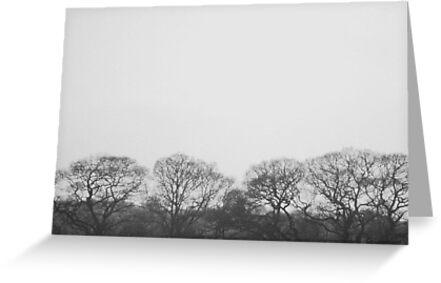 the serenity of trees by marysia wojtaszek
