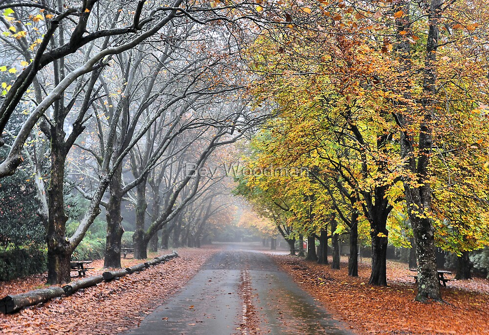 The Avenue - Mt Wilson NSW Australia by Bev Woodman