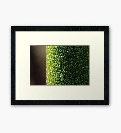 Xanthorrhoea flower stem Framed Print